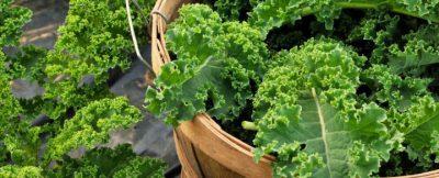 Kale Bio