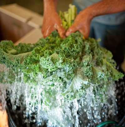 kale biologique