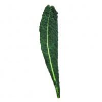Kale noir bio